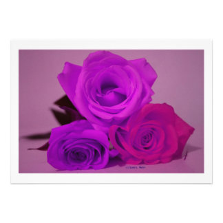Three roses, tinted purple on a purple back personalized announcements