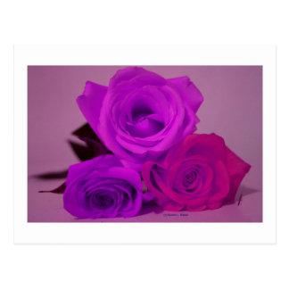 Three roses, tinted purple on a purple back post card