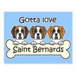 Three Saint Bernards Postcard