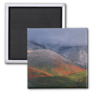 Three seasons of foliage, red maples and fall 2 inch square magnet