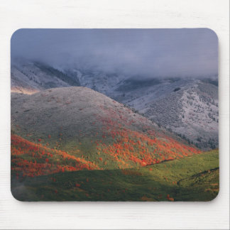 Three seasons of foliage, red maples and fall mouse pad