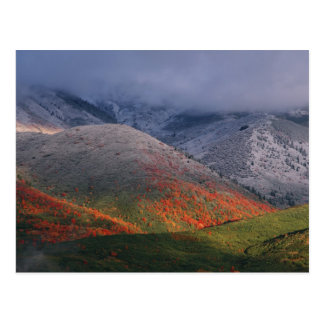 Three seasons of foliage, red maples and fall postcard