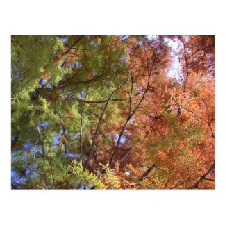 Three Seasons Postcard