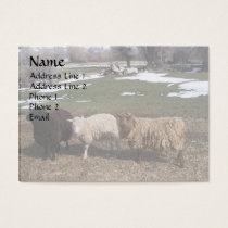 Three Sheep Business Card