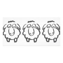 three sheeps card