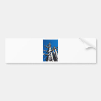 Three Skeletal Trees With Blue Sky Bumper Sticker