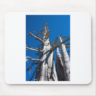 Three Skeletal Trees With Blue Sky Mouse Pad