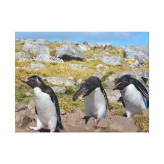 Three Snares Penguins Canvas Print