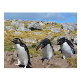 Three Snares Penguins Postcard