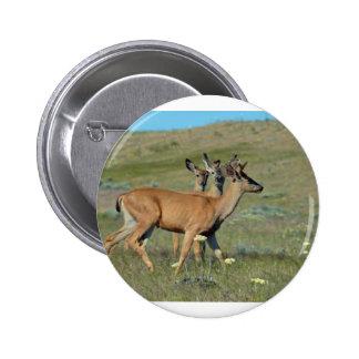 Three Spring Bucks Pins