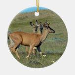 Three Spring  Bucks Ornament