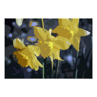 THREE SPRING DAFFODILS POSTER