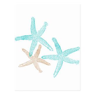 Three Starfish Prints Postcard