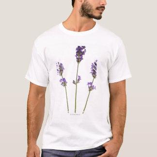 Three stems of English purple lavender flowers, T-Shirt