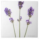 Three stems of English purple lavender flowers, Large Square Tile