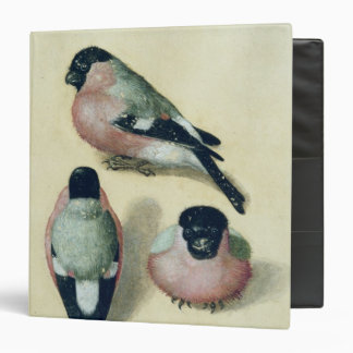 Three studies of a bullfinch binder