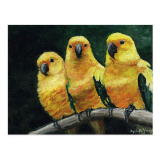 Three Sun Conures Bird Art Postcard