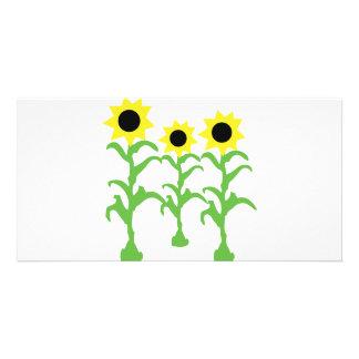 three sun flowers icon card