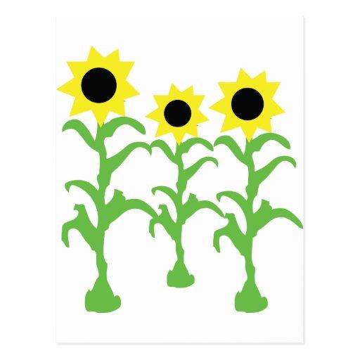 three sun flowers icon postcard