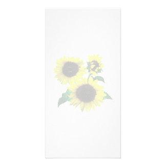 Three Sunflowers Photo Card
