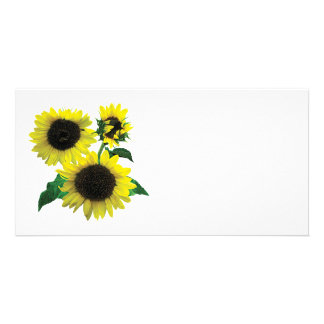 Three Sunflowers Photo Card Template