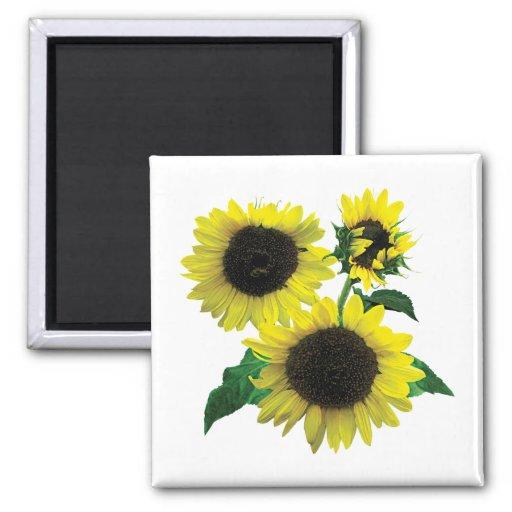 Three Sunflowers Refrigerator Magnet