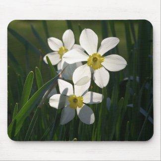 Three Sunny Daffodils mousepad
