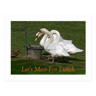"""THREE SWANS AND A DUCK AT FEEDING BUCKET"" POSTCARD"