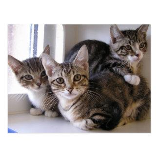 Three Tabby Kittens Postcard