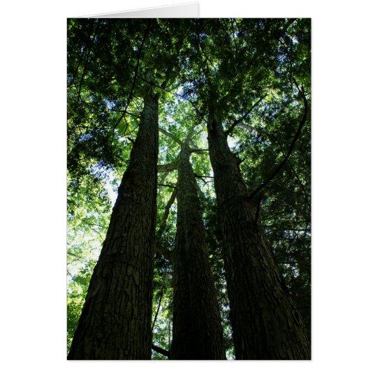 Three Tall Trees Card