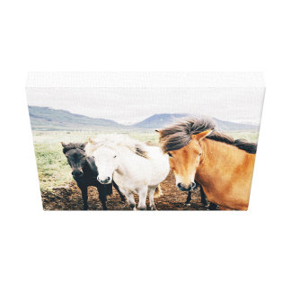 Three Themed, Iceland  Brown, White And Black Hors Canvas Print