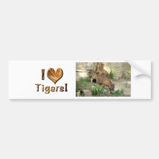 Three Tiger Cubs Car Bumper Sticker