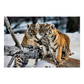 Three Tiger Cubs In Snow Art Gifts Poster