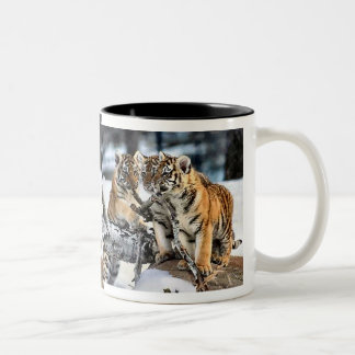 Three Tiger Cubs In Snow Art Gifts Two-Tone Coffee Mug