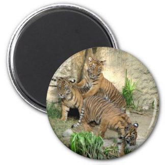 Three Tiger Cubs Magnet