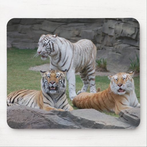 Three Tigers Mouse Pad