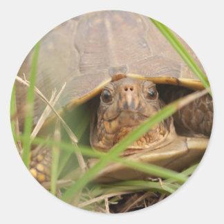 Three-toed Box Turtle Sticker