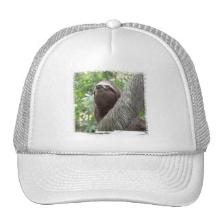 Sloth in party hat - photo#28
