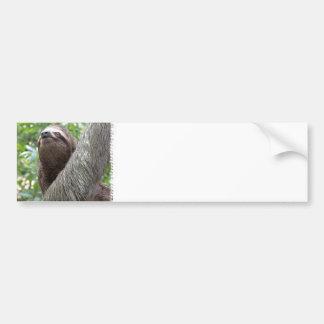 Three Toed Sloth Bumper Sticker Car Bumper Sticker