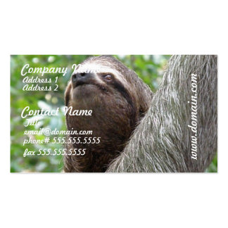 Three Toed  Sloth Busines Card Business Cards