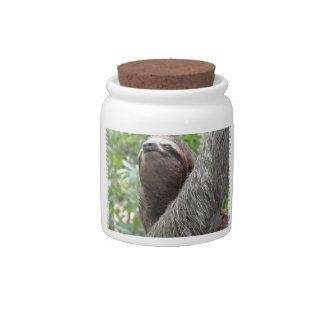 Three Toed Sloth Candy Jar