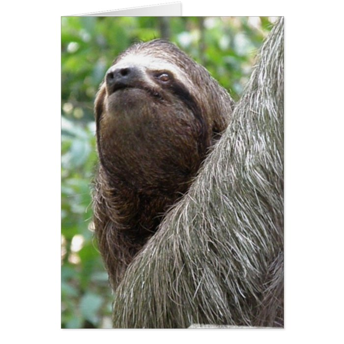Three Toed Sloth Greeting Card