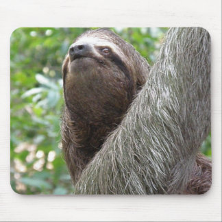 Three Toed Sloth Mouse Pad