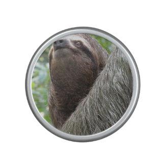 Three Toed Sloth Speaker