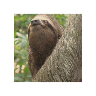 Three Toed Sloth Wood Canvases