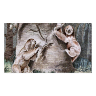 Three Toed Sloths Vintage Art Double-Sided Standard Business Cards (Pack Of 100)