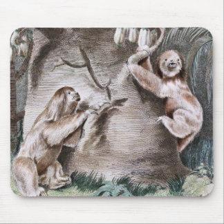 Three Toed Sloths Vintage Art Mouse Pad