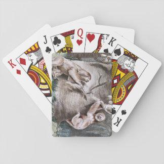 Three Toed Sloths Vintage Art Poker Deck