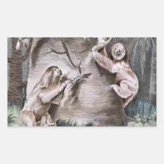 Three Toed Sloths Vintage Art Rectangular Sticker