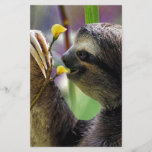 """Three-Toed Tree Sloth<br><div class=""""desc"""">The three-toed Sloth are medium-sized mammals belonging to the families Megalonychidae (two-toed sloth) and Bradypodidae (three-toed sloth), classified into six species. They are part of the order Pilosa as well as are therefore related to anteaters, that support a similar set of particular claws. Extant sloths are arboreal (tree-dwelling) residents of...</div>"""
